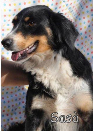 foto articolo rifugio cani