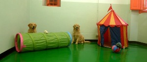 dogresort-firenze-dogspace